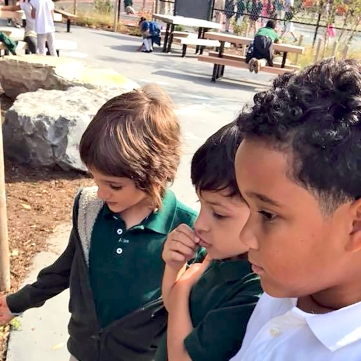 Watching autumn monarch butterflies in Brooklyn Arbor's new outdoor classroom. (Photo credit: Brooklyn Arbor Facebook)