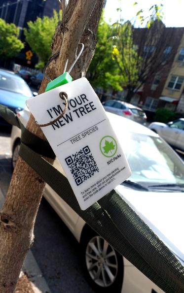 Tree code 001