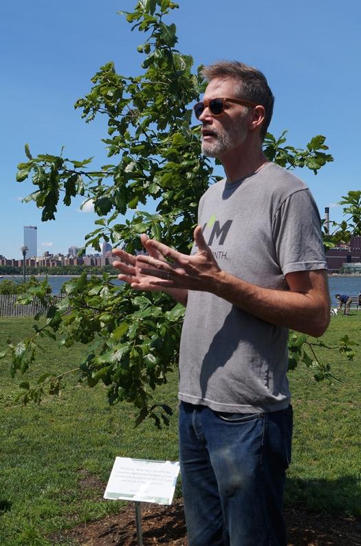 Tree 635_web